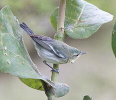 Adult female. Always a birder!/Flickr (CC BY 2.0)
