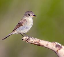 Adult. Birdiegal/Shutterstock