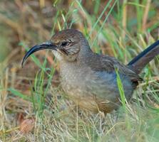 Adult. Chris Miller/Audubon Photography Awards