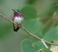 Adult male. Syler Peralta Ramos/Audubon Photography Awards