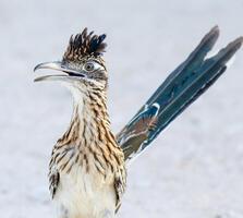 Adult. Trudy Walden/Audubon Photography Awards