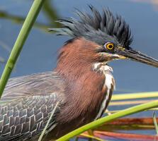 Adult. Barbara Houston/Audubon Photography Awards