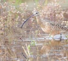 Adult. Ann Kramer/Audubon Photography Awards