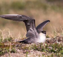 Adult. Tom Ingram/Audubon Photography Awards
