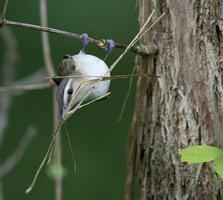 Adult. Greg Pasek/Audubon Photography Awards