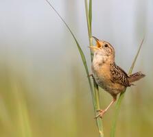 Adult. Kathryn Cubert/Audubon Photography Awards