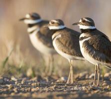 Adults. Harry Colquhoun/Audubon Photography Awards