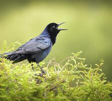 Adult male. Tammy Pick/Audubon Photography Awards