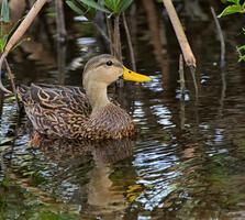 Adult male. Don MacCarter/Audubon Photography Awards