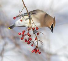 Female. Peter Brannon/Audubon Photography Awards
