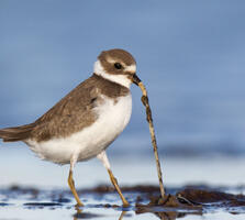 Juvenile. Gail Bisson/Audubon Photography Awards