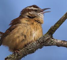 Adult. Jeremy Coltogirone/Audubon Photography Awards