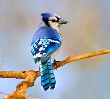 Adult. Brian Kushner/Audubon Photography Awards