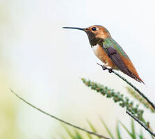 Adult male. Kelly Overduijn/Audubon Photography Awards