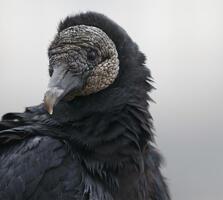 Adult. Melyssa St. Michael/Audubon Photography Awards