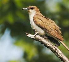 Adult. Shayna Hartley/Audubon Photography Awards