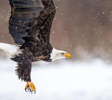Adult. Bonnie Block/Audubon Photography Awards