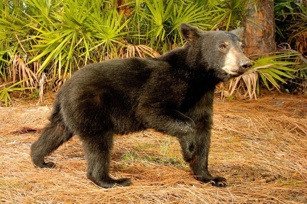 Где живет медведев фото его дома частности