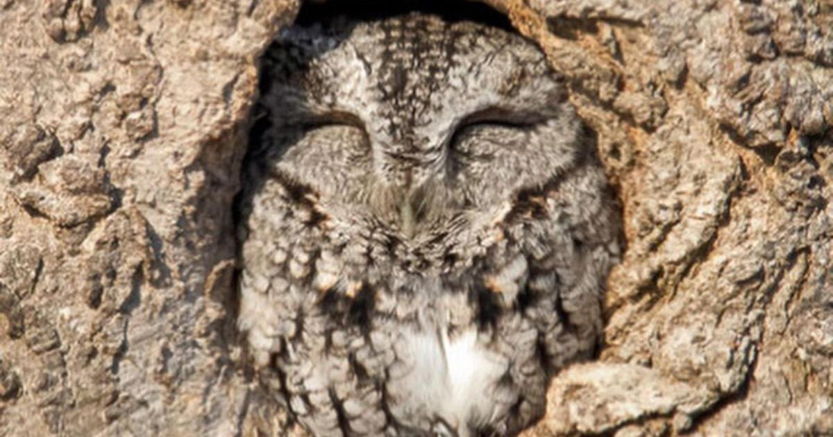 Follow These Amazing Instagram Accounts for Beautiful Bird Photos