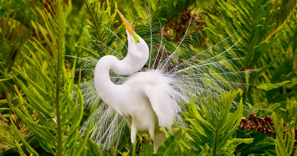 Victory! Federal Judge Rules Administration?s Bird-Killing Policy is Illegal