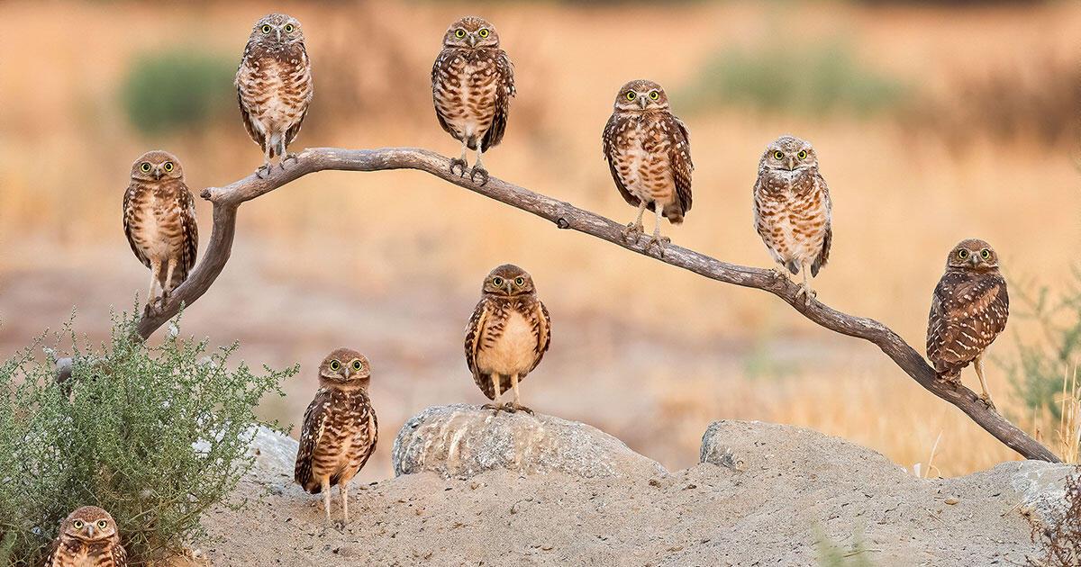 The 2020 Audubon Photography Awards: Top 100