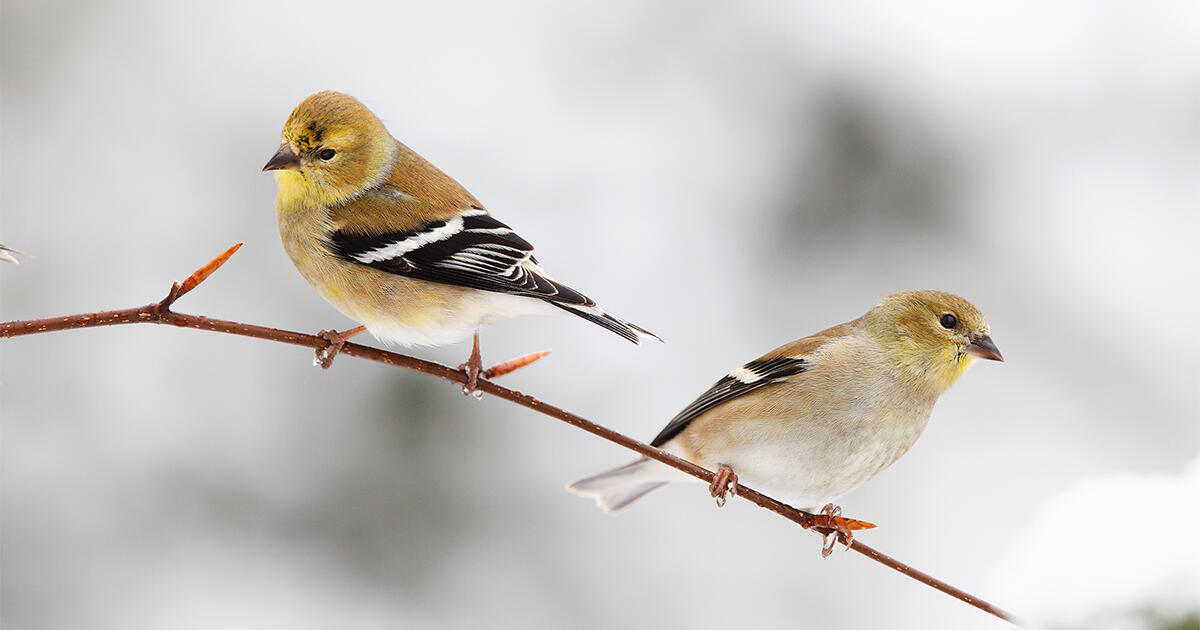 Learn The Fall And Winter Colors Of These Common Bird Species Audubon