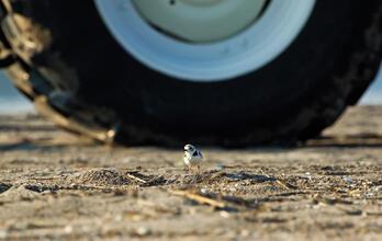 A Closer Look At Audubon's Advocacy