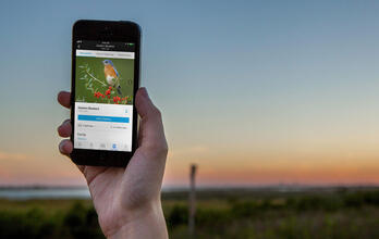 Download the Audubon Bird Guide App