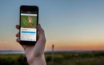 Download the Audubon Bird Guide App