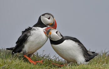 Protect Seabirds and their Habitats