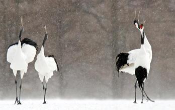 Climate Threatens Birds Worldwide