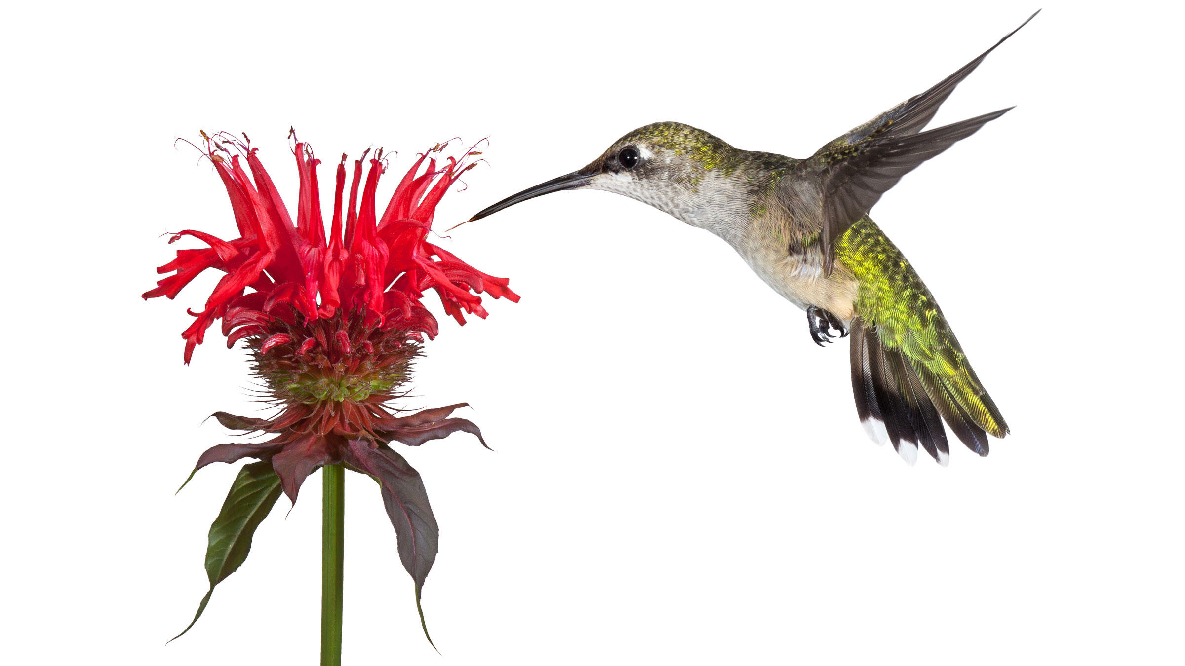 The Audubon Guide To Attracting Hummingbirds And Orioles Audubon