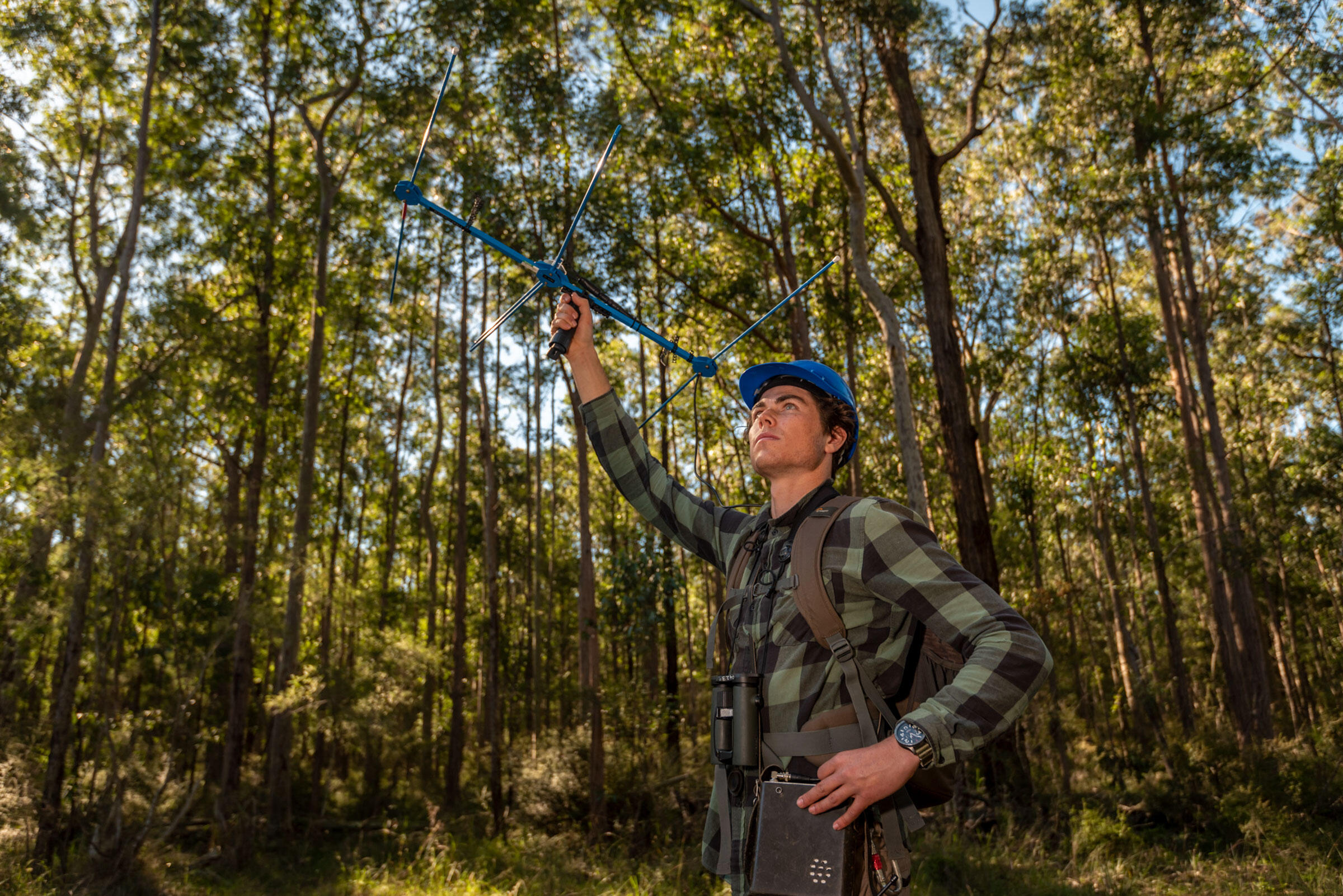 Lachlan Hall uses a wildlife tracking receiver to find and determine the location of the recently releases Regent Honeyeaters. Doug Gimesy