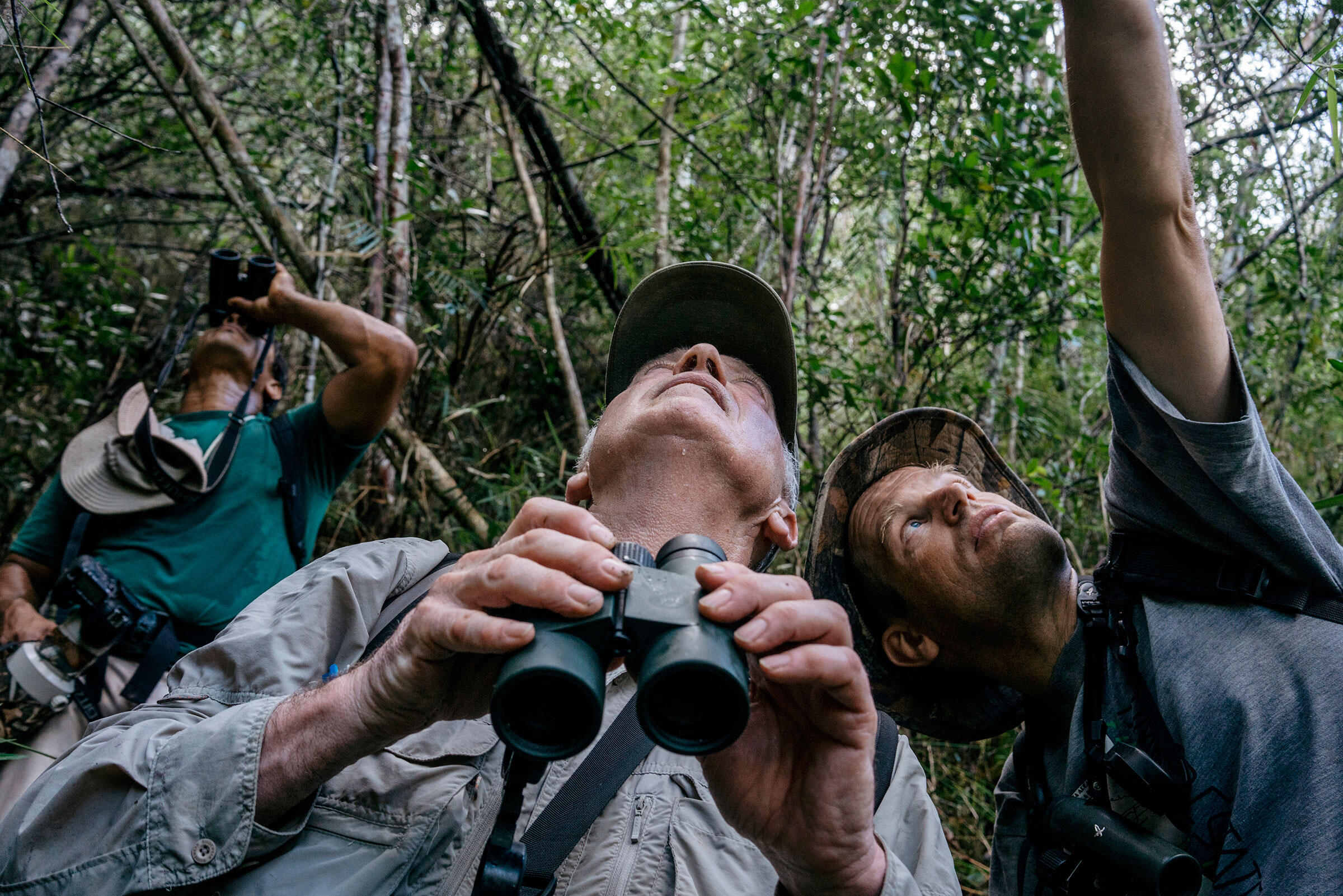 National park guide El Indio (in the back) and Gallagher and Lammertink search the treetops. Greg Kahn