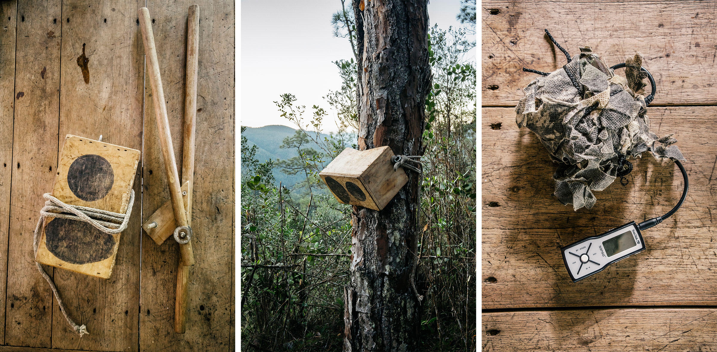 From left: The double-knock box used to simulate the BAM-bam the Ivory-bill would make on a pine; Lammertink's camouflaged audio feedback device plays bird calls. Photos: Greg Kahn