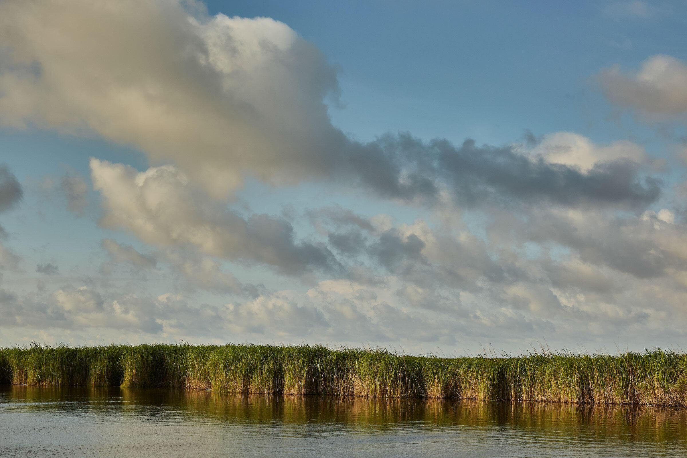 Las marismas costeras de Pine Island ofrecen una contención contra el crecimiento de los mares; los expertos dicen que salvarlas es clave para proteger el patrimonio del santuario y su futuro.