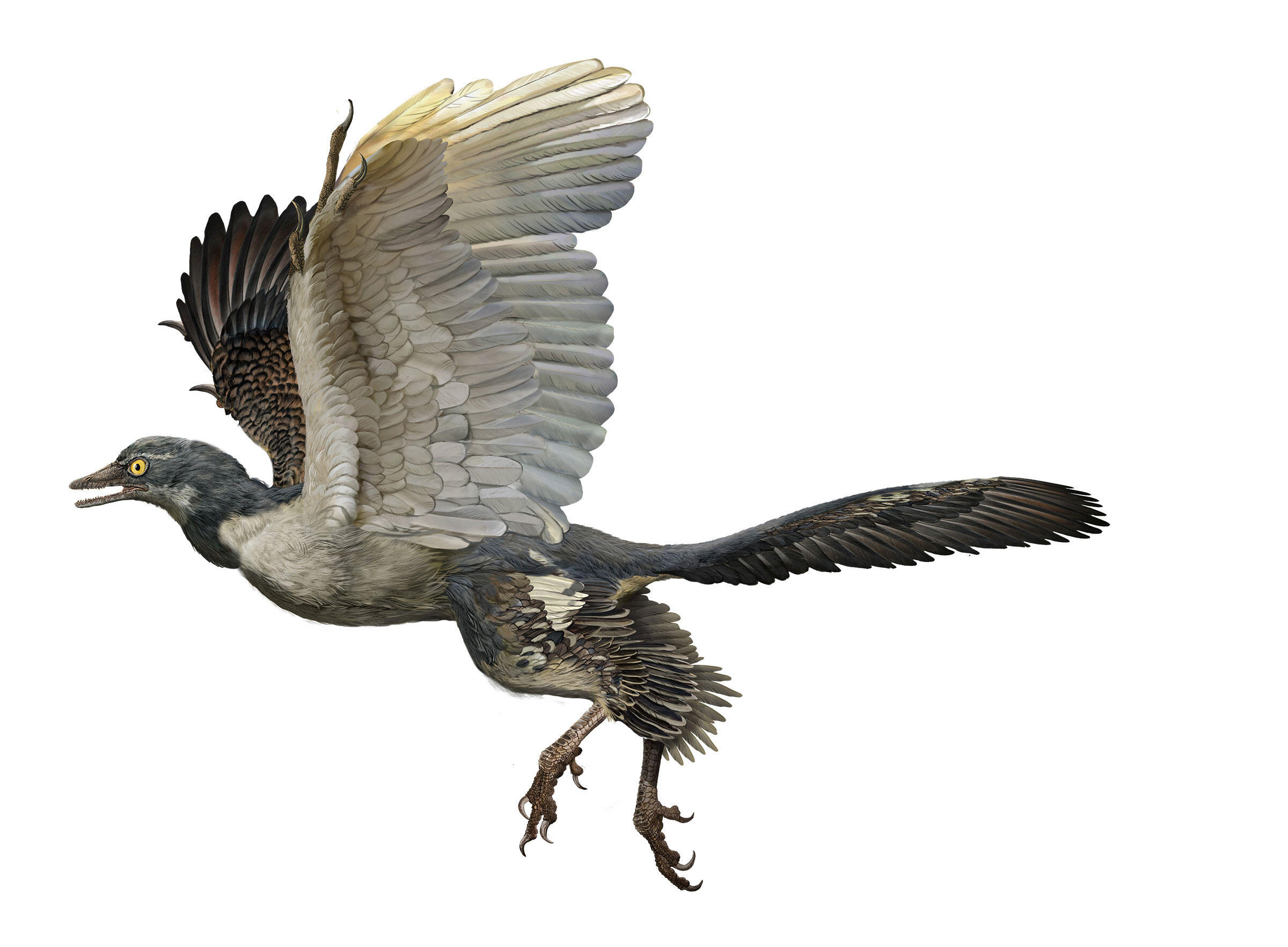 11 Terrifying Dinosaurs That Rocked Feathers Better Than Birds Audubon