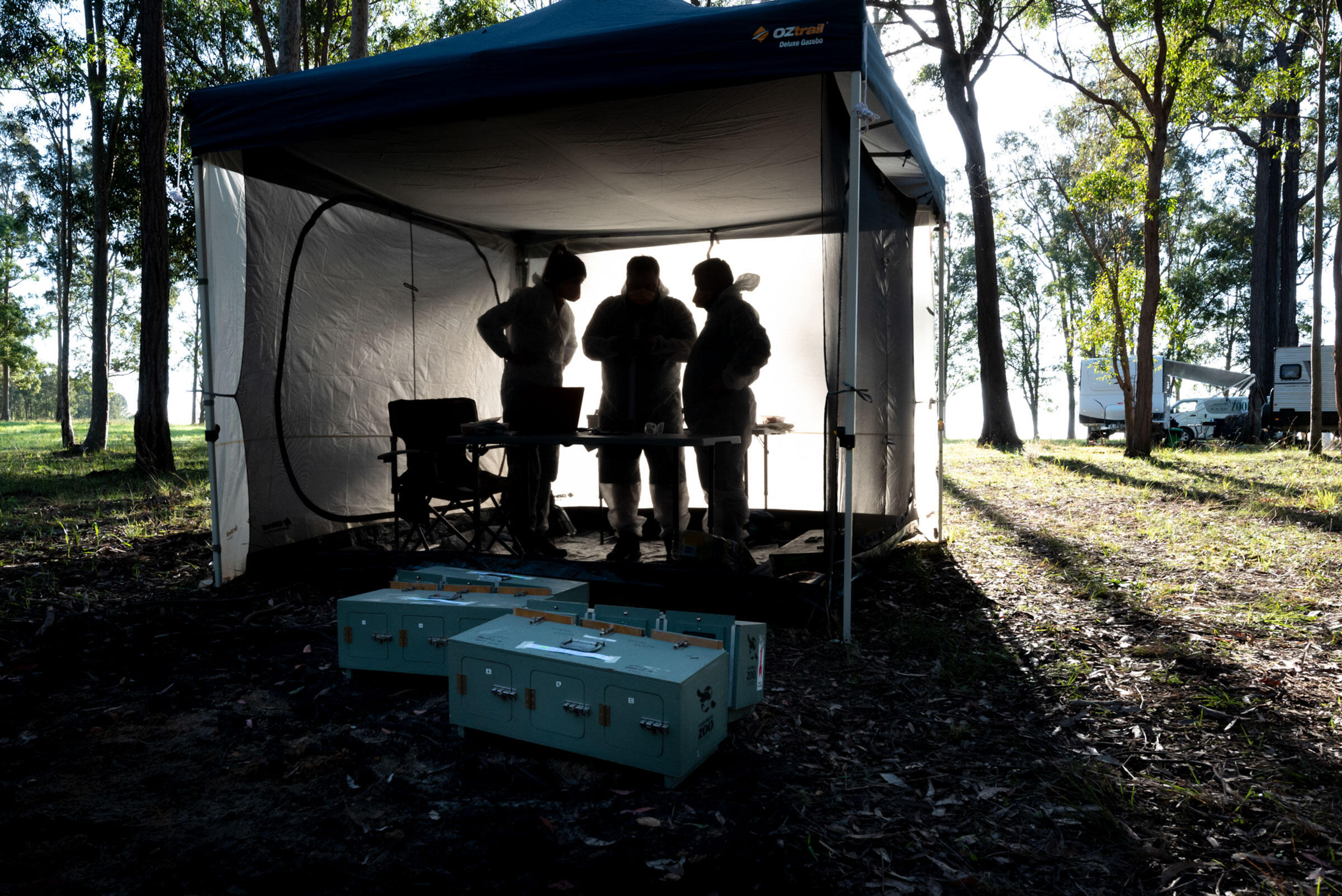 Scientists weigh and attach radio transmitters to captive-bred Regent Honeyeaters before transporting them to other tents to get used to their release environment. Doug Gimesy