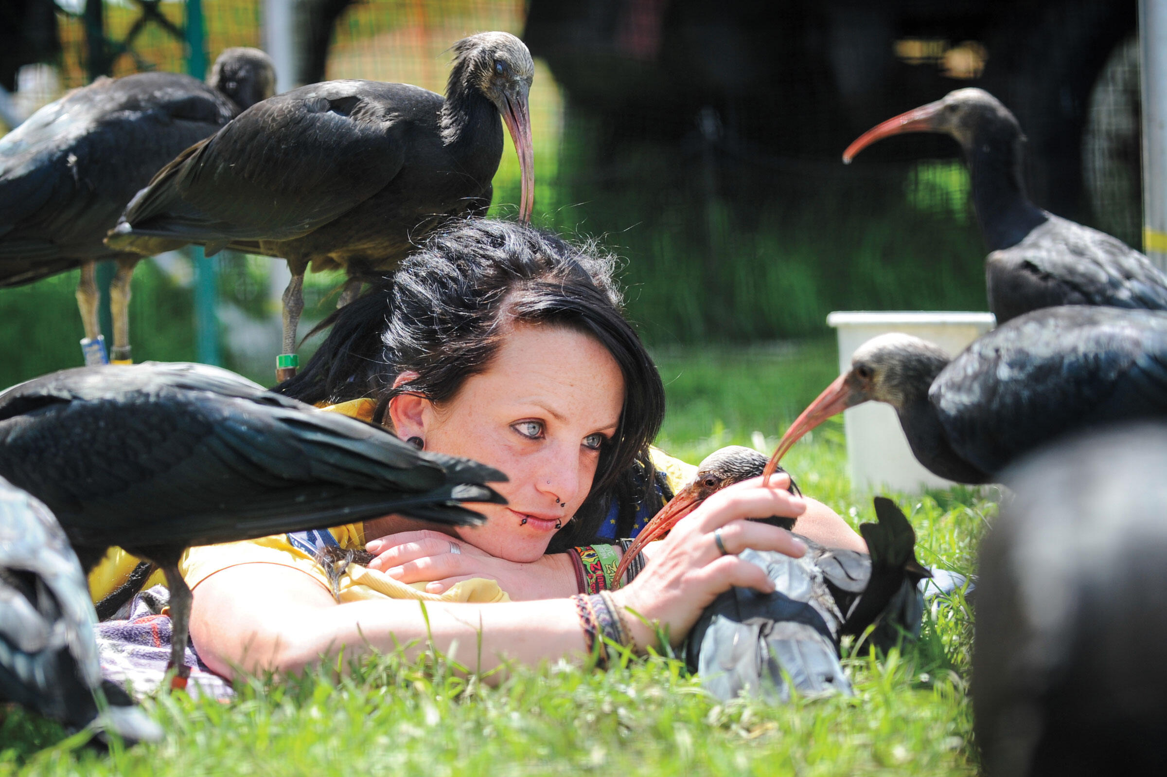 Esterer bonds with young ibises. Esther Horvath