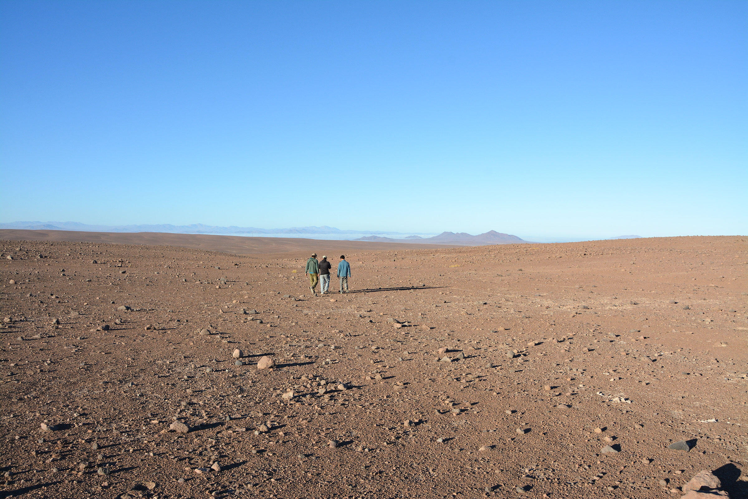 Hornby's Storm Petrel nesting colony site in the Atacama Desert. Felipe de Groote
