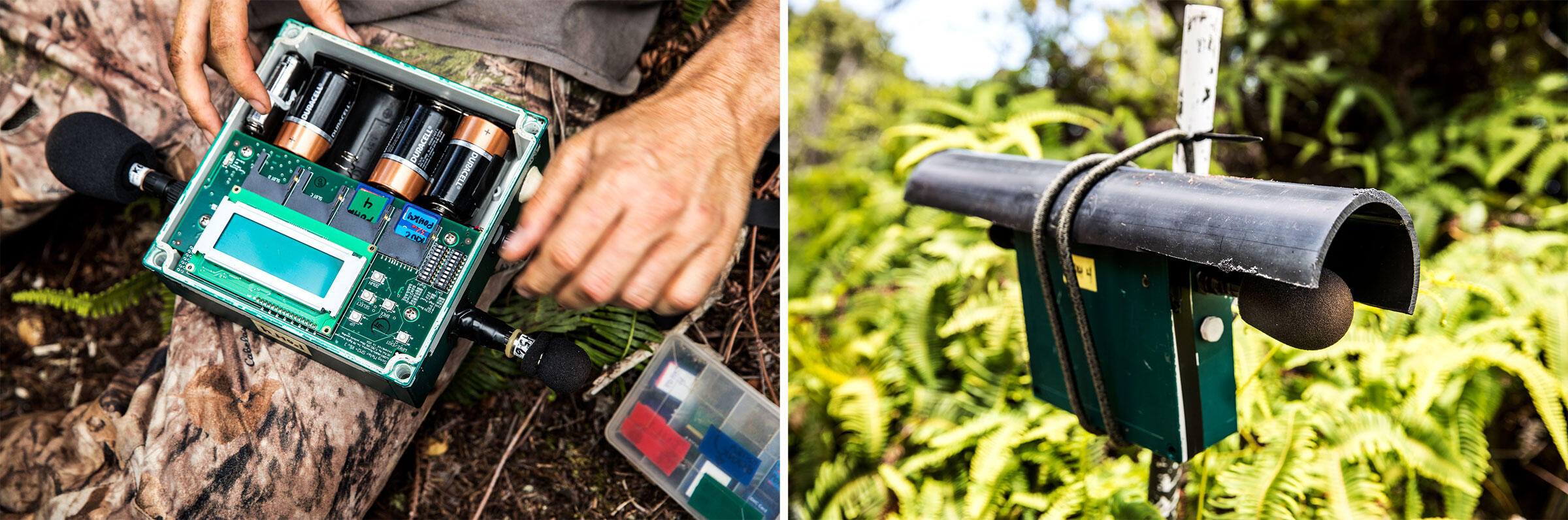 Scientists use acoustic monitoring devices to detect seabirds in the dense forest of Kauai. Photos: Tom Fowlks