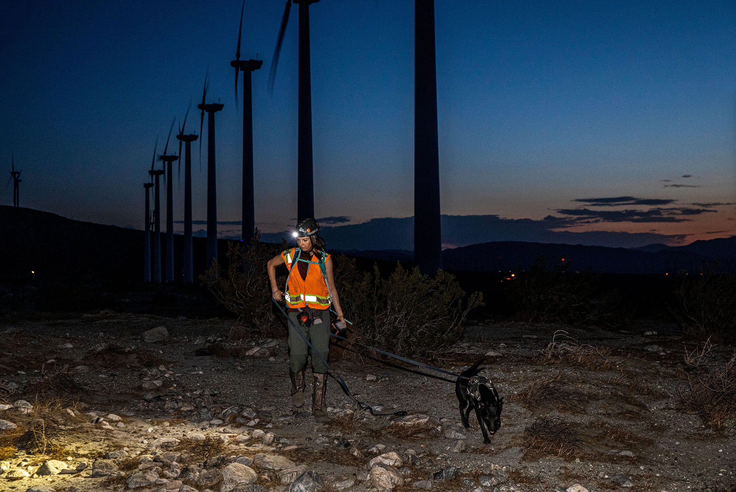 A woman wearing a bright orange vest illuminates a desert landscape with her headlamp as she walks with a black dog on a leash. Above them stands a row of wind turbines. Behind them, faint orange sunlight and a smattering of clouds mark the edge of a mostly dark, clear sky.
