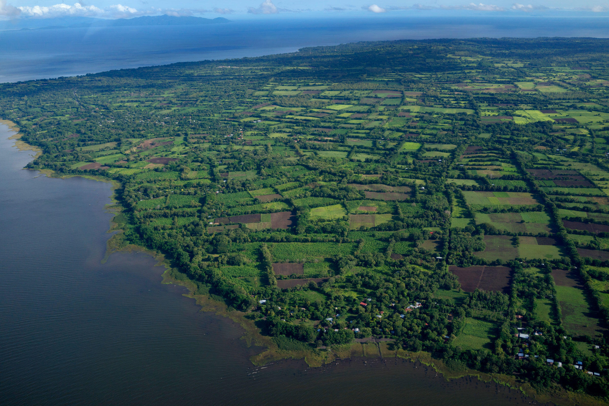 Lake Nicaragua's Ometepe Island, which was declared a Biosphere Reserve in 2010, boasts a variety of crops, including plantains and rice, as well as birds like the Three-wattled Bellbird and Yellow-naped Parrot. Ivan Kashinsky