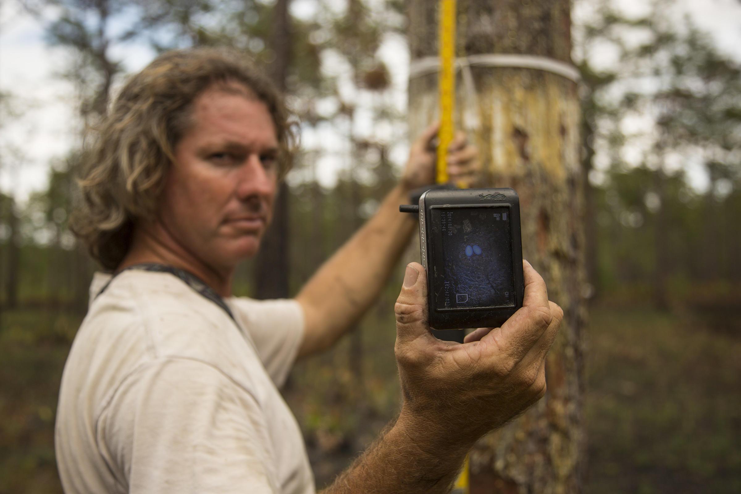 Florida biologist Michael Keys uses a wireless video camera setup designed by Ivory-billed Woodpecker searcher David Luneau. Mac Stone