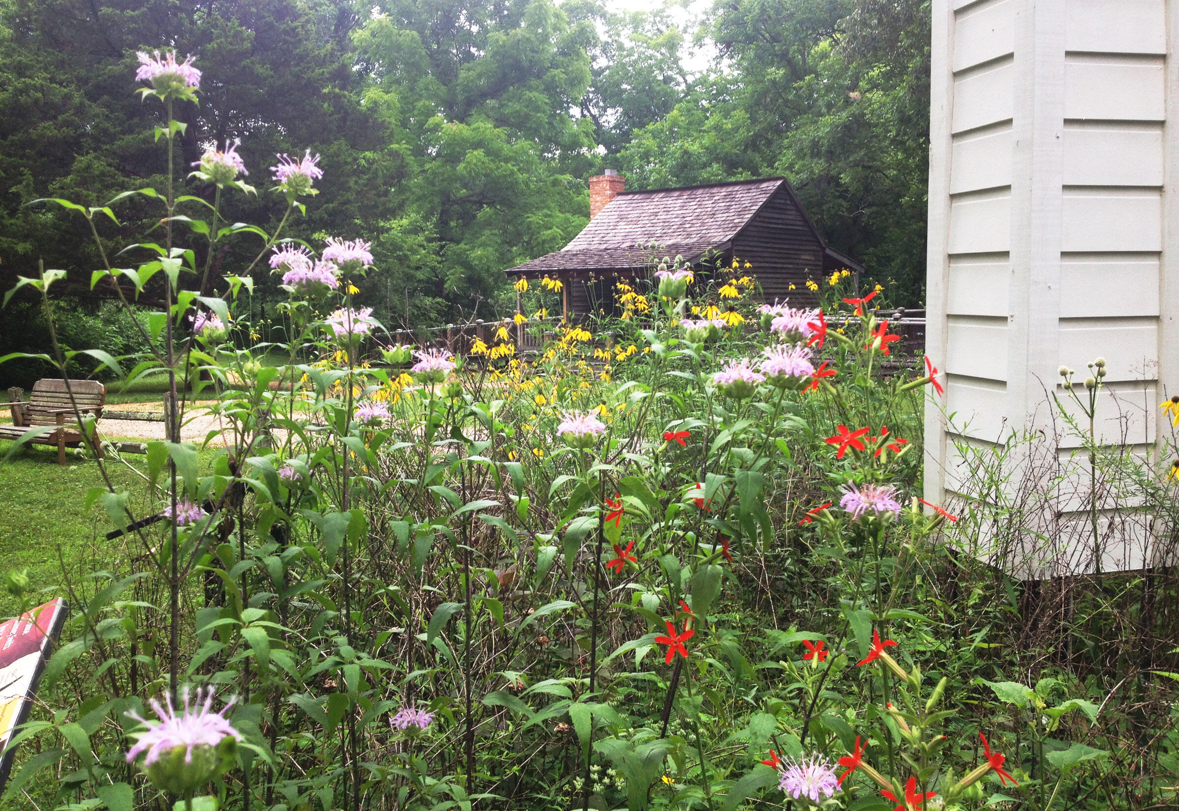 """A native garden at the Strawberry Plains Audubon Center in Mississippi. Mitch Robinson/<a href=""""//strawberryplains.audubon.org/"""">Strawberry Plains Audubon Center</a>"""