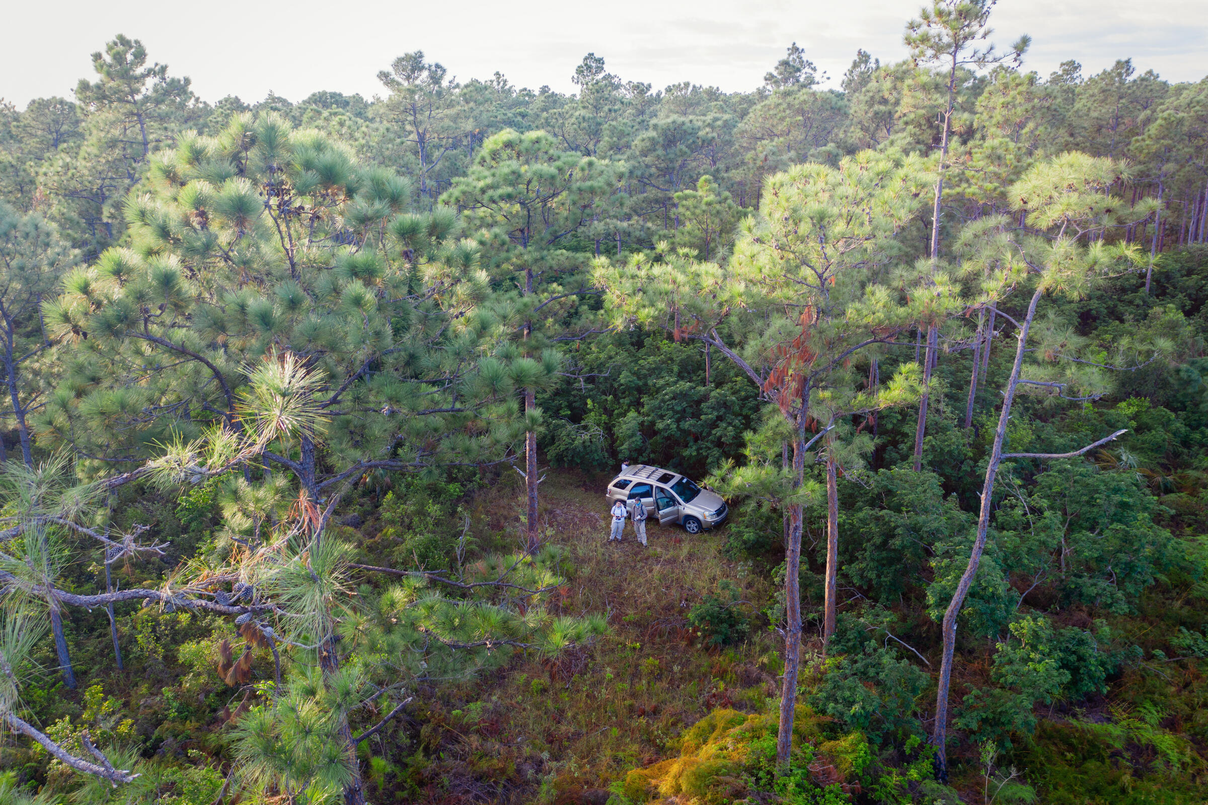Vegetation and bird surveys being conducted by Audubon and Bahamas National Trust staff in the South Abaco pine forest. Mike Fernandez/Audubon