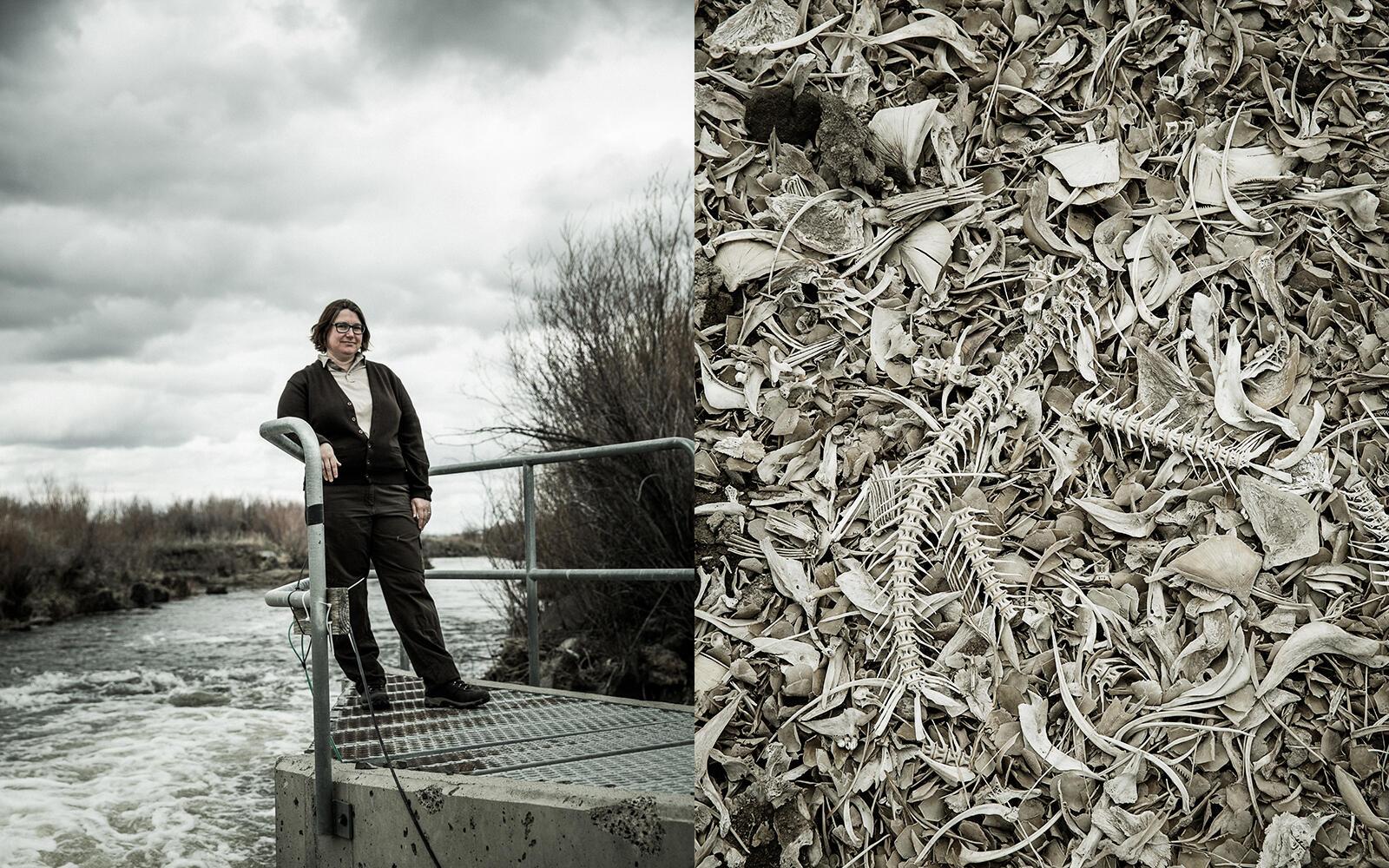 Linda Beck, fish biologist, photographed at a fish trap on the Blitzen river south of Lake Malheur, Malheur National Wildlife Refuge. John Clark