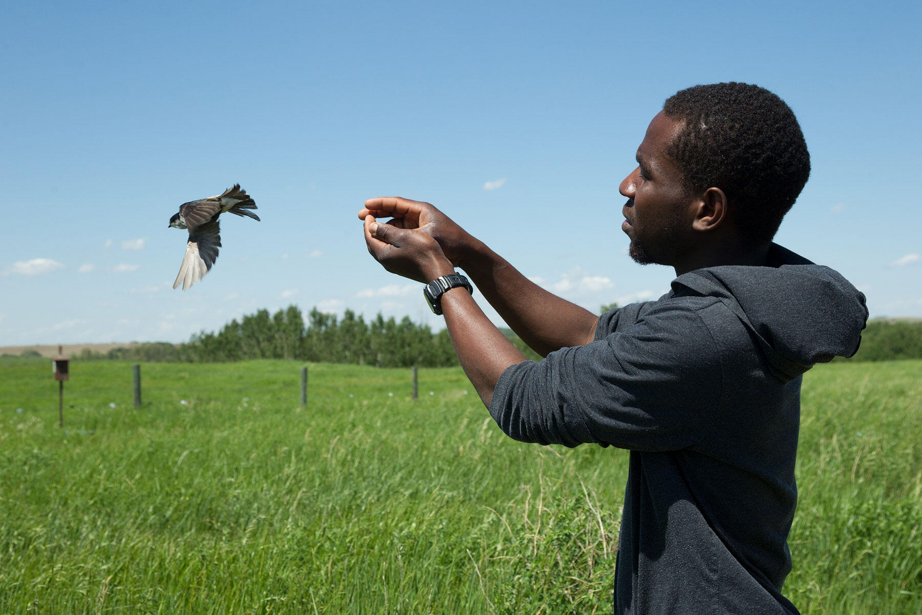 Bagonluri releases a Tree Swallow after having weighed and measured it. Connor Stefanison
