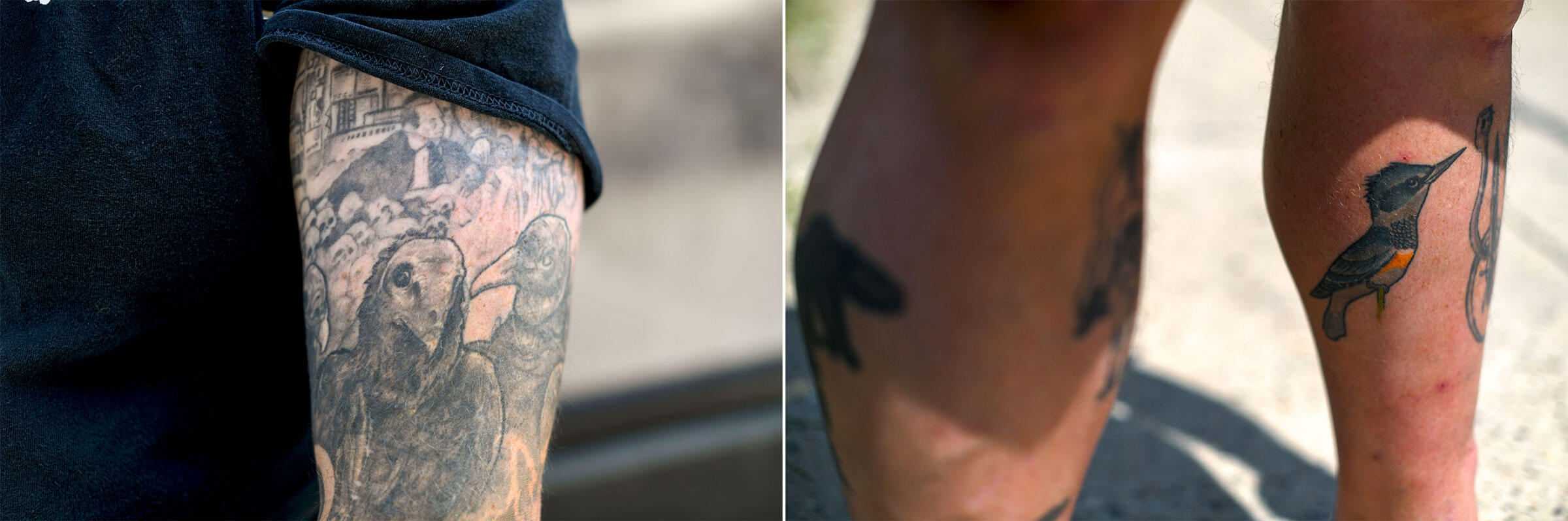 A trio of vultures (left) and a Belted Kingfisher serve as badges of Croasdale's birding obsession. Photos: Mark Makela