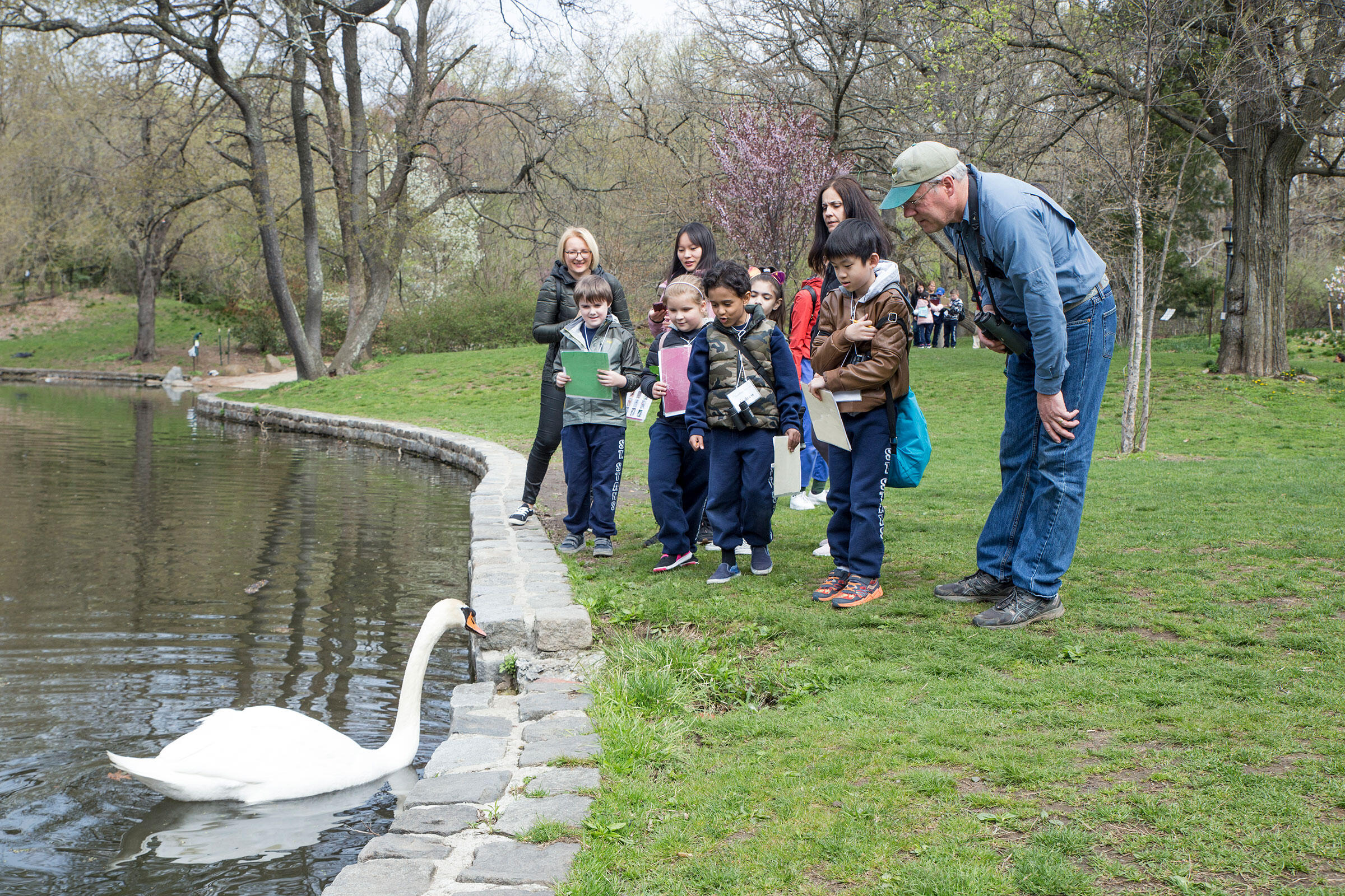 The second graders get a close look at a curious Mute Swan. Ambika Singh